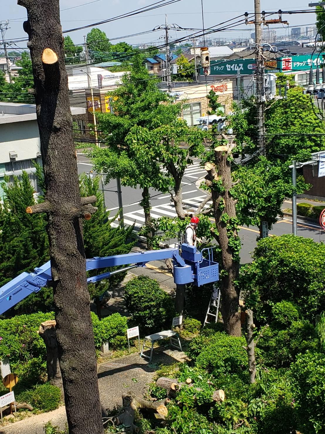 5月 ふじみ野市 樹木伐採作業・内装解体